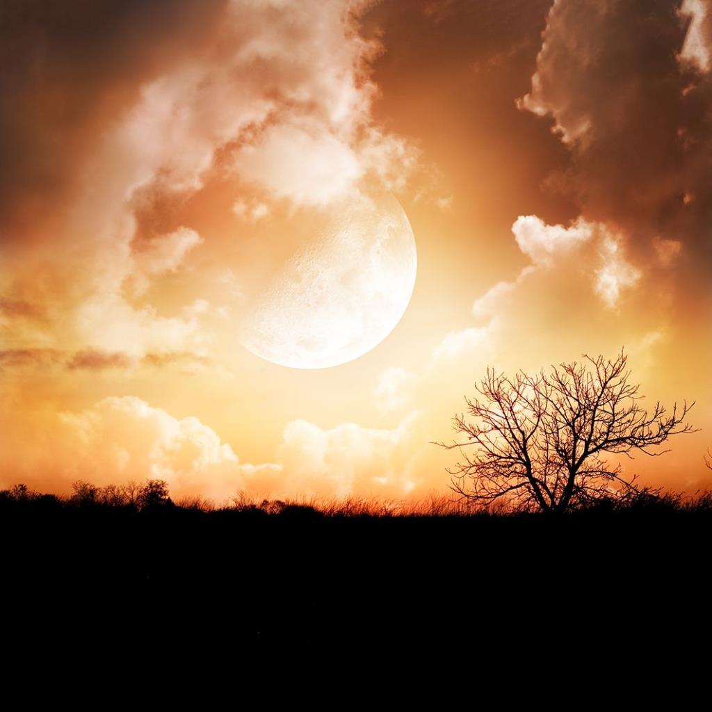 baskılı fon perde ay ışığı gece ağaç manzara desenli