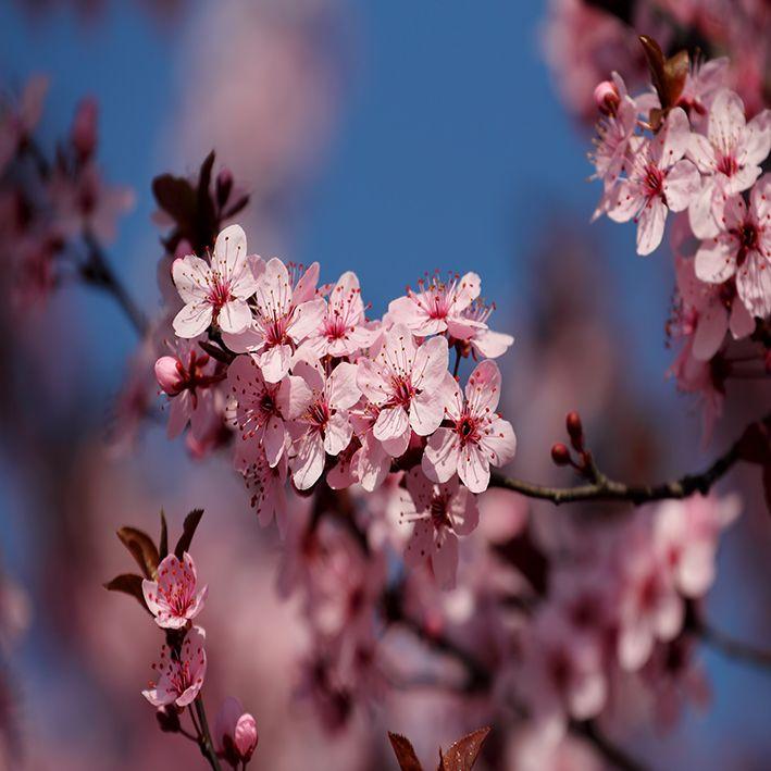 baskılı fon perde bahar etkili meyve çiçeği desenli