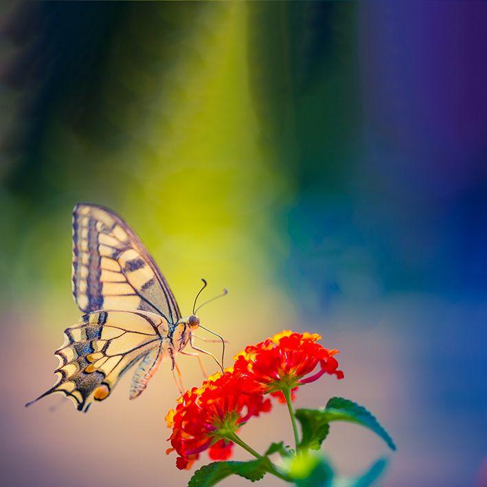 baskılı fon perde bahar manzaralı kırmızı çiçekte kelebek desenli