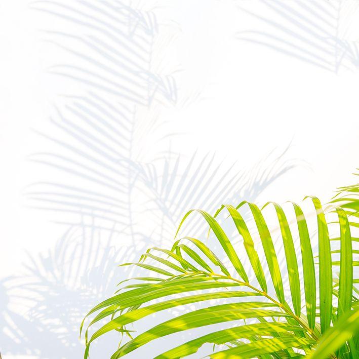 baskılı fon perde beyaz duvarda palmiye yaprak gölge desenli