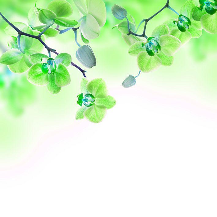 baskılı fon perde beyaz zemin üzerine yeşil neon renkli orkide desenli