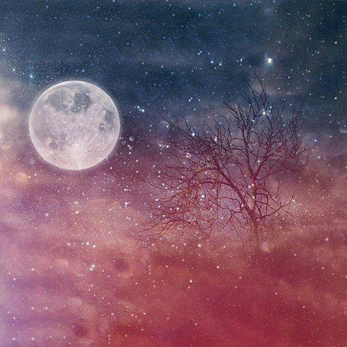 baskılı fon perde dal gece gökyüzü yıldız desenli