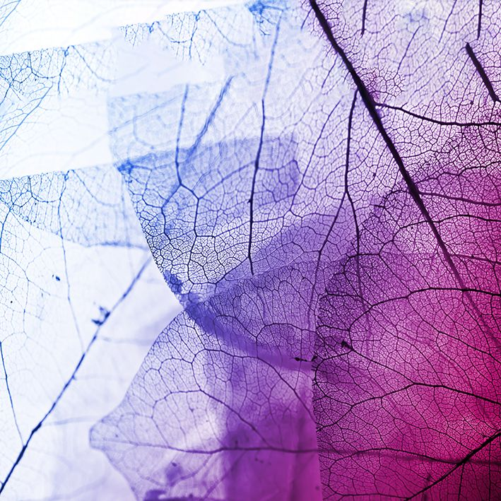 baskılı fon perde damarlı yaprak desenli pembe mavi
