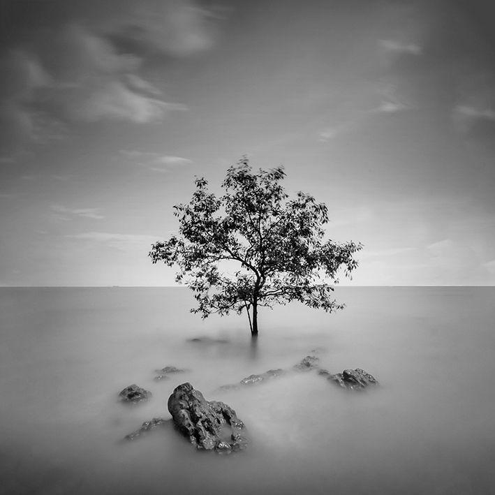 baskılı fon perde deniz suyundaki ölü ağaç ile siyah beyaz desenli