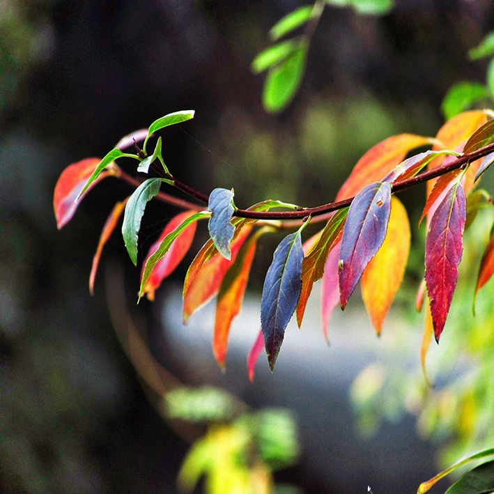 baskılı fon perde doğa etkili renkli yaprak desenli