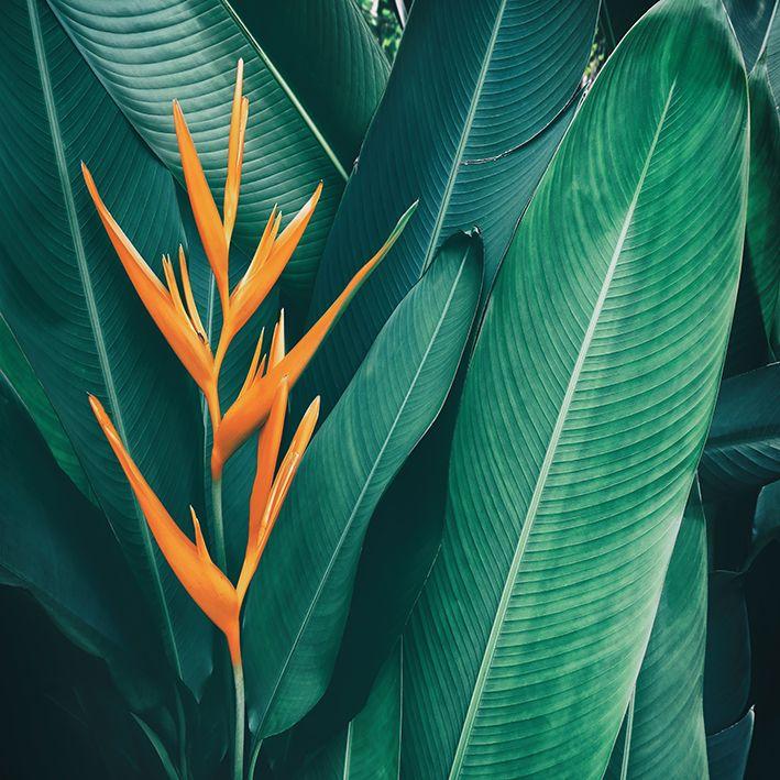 baskılı fon perde doğa etkili yeşil ve turuncu egzotik çicek desenli