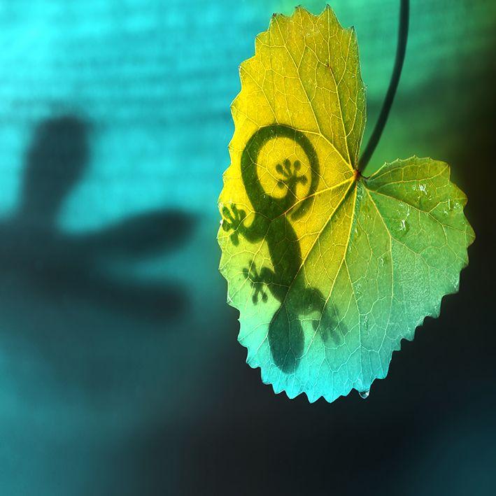 baskılı fon perde doğa etkili yeşil yaprakta kertenkele gölgesi desenli