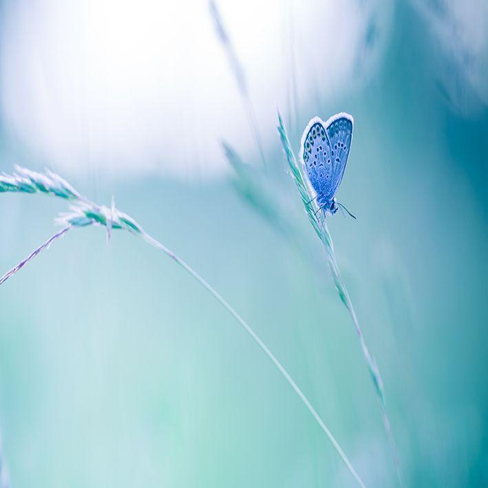 baskılı fon perde doğa manzaralı mavi renkli kelebek desenli