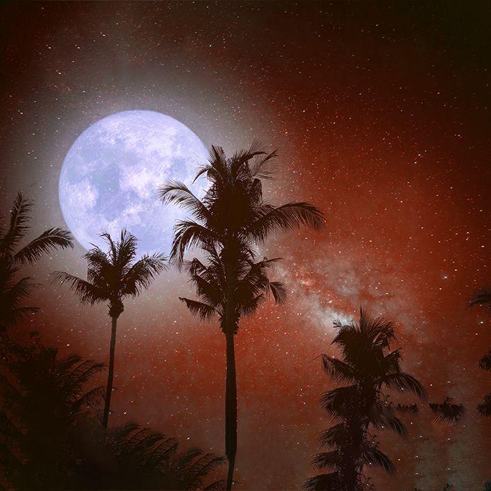 baskılı fon perde dolunay etkili palmiye ağacı ve kırmızı renk desenli