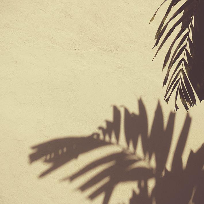baskılı fon perde duvarda palmiye yaprak gölge desenli