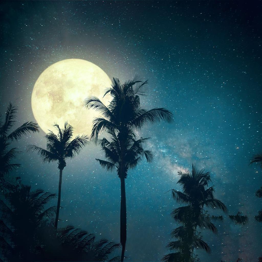 baskılı fon perde gece gökyüzü ışıltılı ay palmiye dal desenli