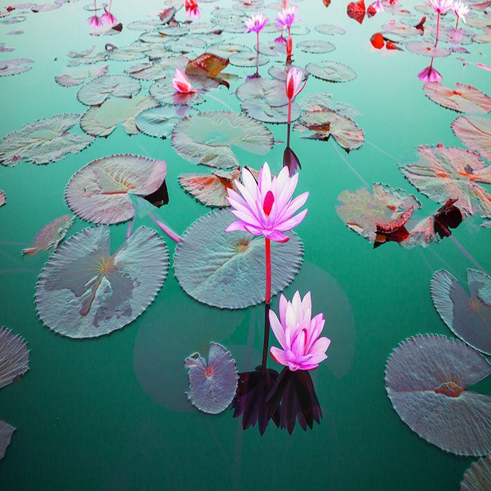 baskılı fon perde göl etkili pembe çiçek desenli