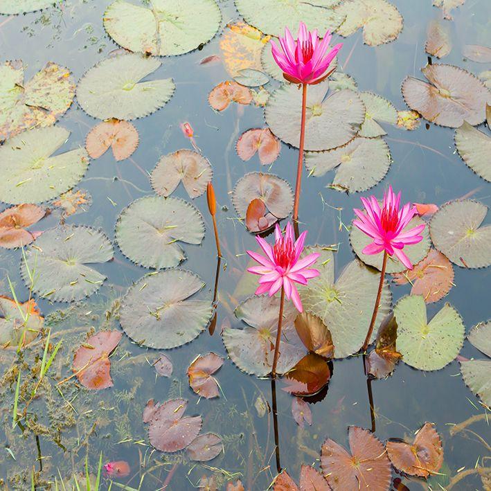 baskılı fon perde göl manzaralı lotus çiçek desenli