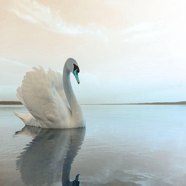 baskılı fon perde göl ve kuğu etkili mavi ve bej renk desenli
