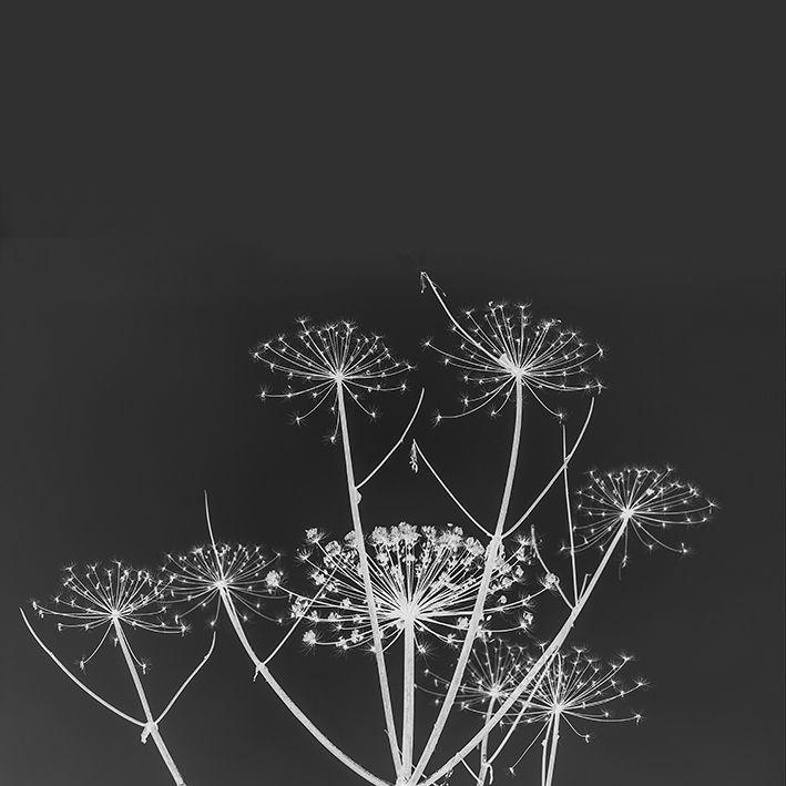 baskılı fon perde gri arka plan etkili bahar çiçeği desenli