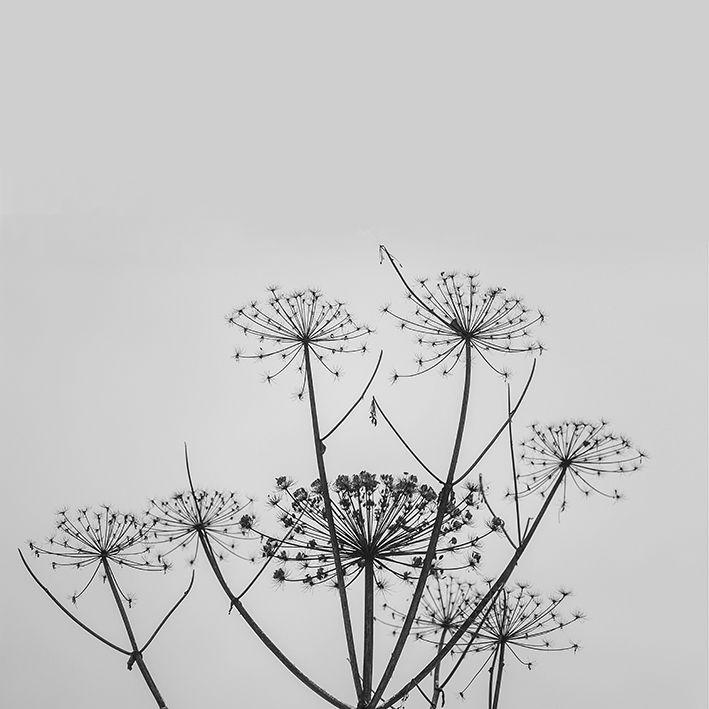 baskılı fon perde gri arka plan kır çiçeği desenli siyah