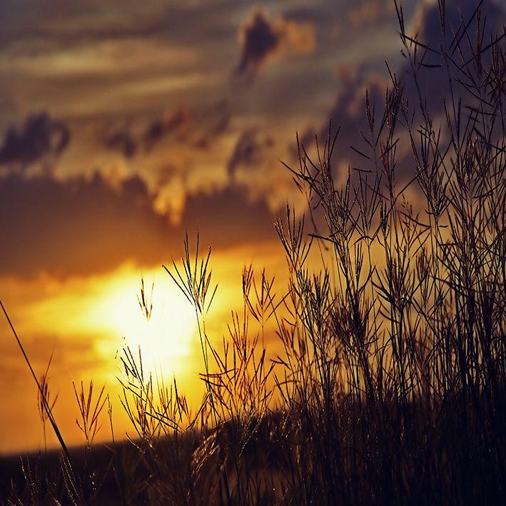 baskılı fon perde gün batımı manzaralı ot desenli