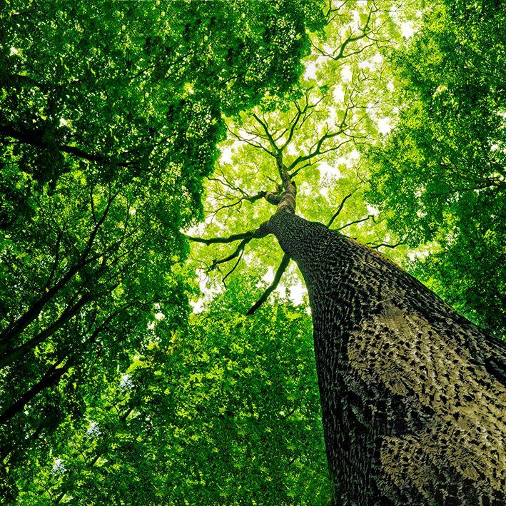 baskılı fon perde güneş ışıklı orman ağaç desenli
