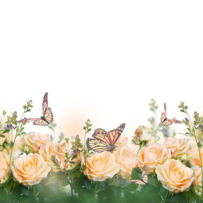 baskılı fon perde güzel güller yeşil yaprak kelebek desenli