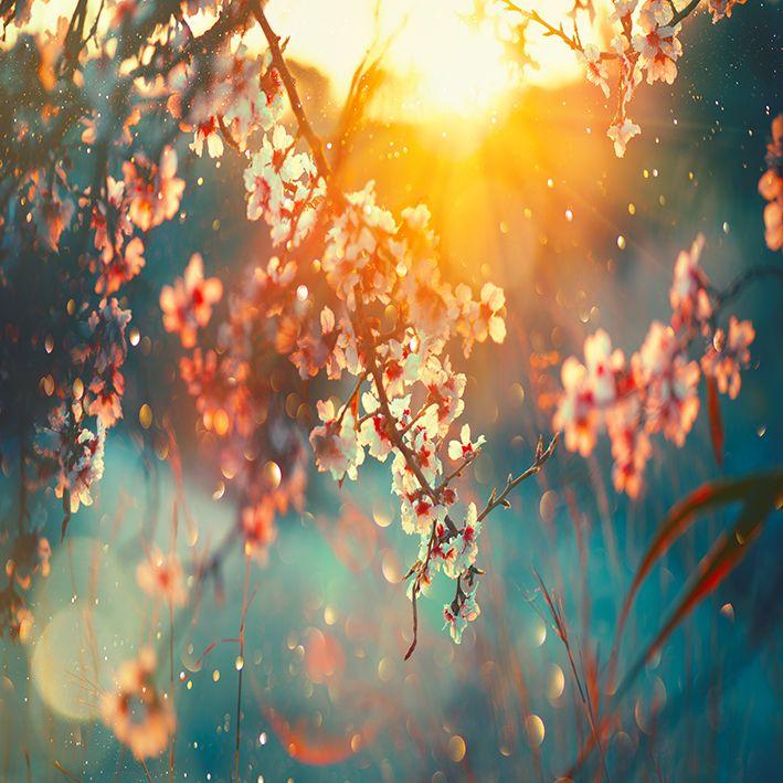 baskılı fon perde ilk bahar manzaralı beyaz renkli bahar çiçek desenli