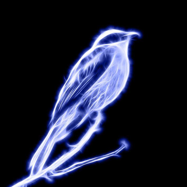 baskılı fon perde ışık çizgili kuş desenli mavi