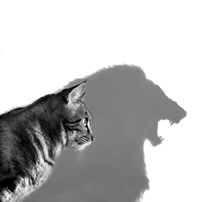 baskılı fon perde kedi aslan gölge desenli siyah beyaz