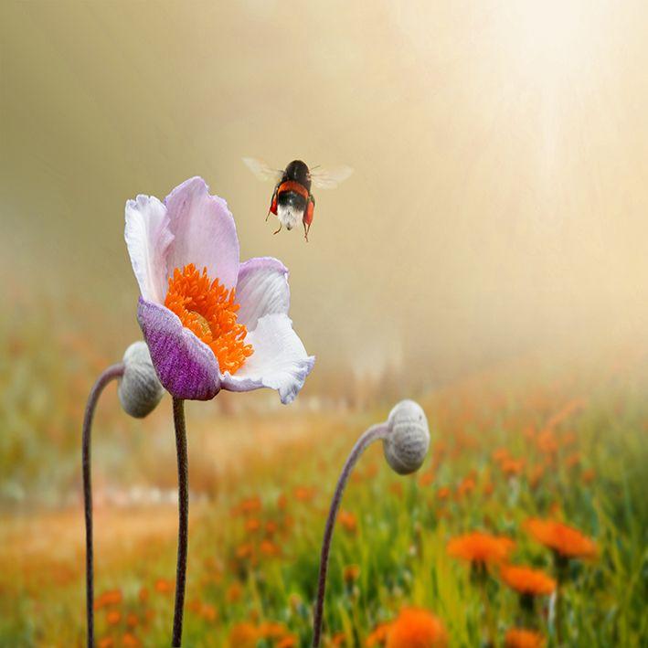 baskılı fon perde kırçiçeği üzerine uçan arı desen