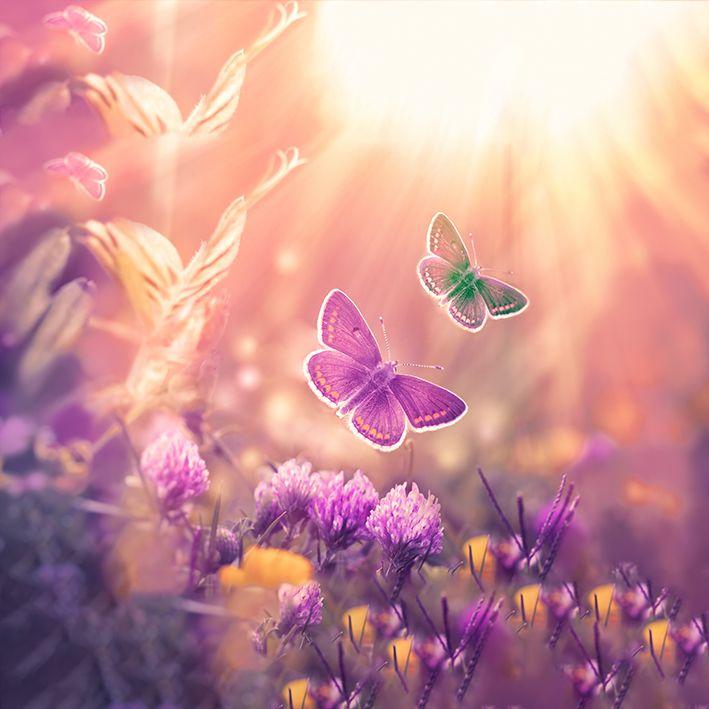 baskılı fon perde kırda güneşe uçan kelebek desenli