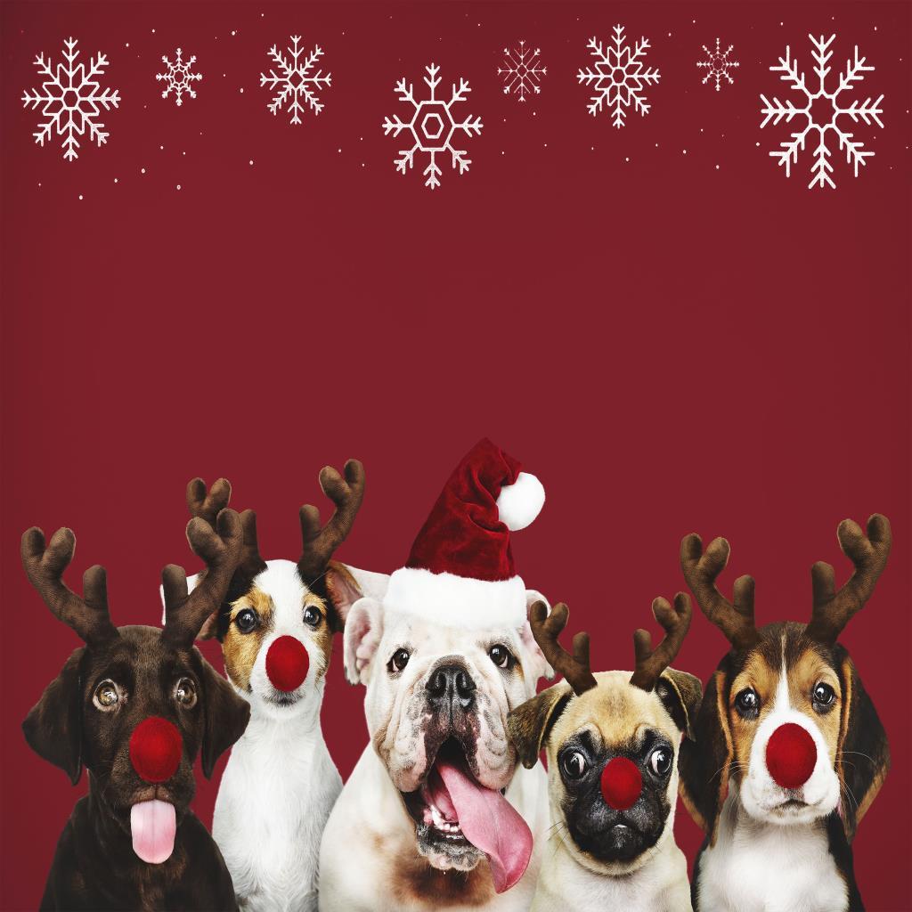 baskılı fon perde kırmızı arkaplan şapkalı köpekler ve kar taneleri