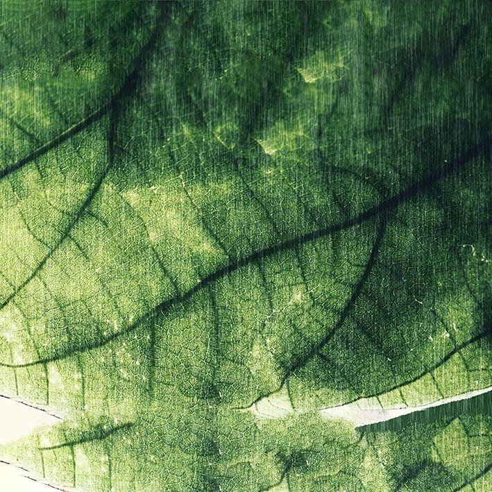 baskılı fon perde koyu renkte yaprak doku desenli