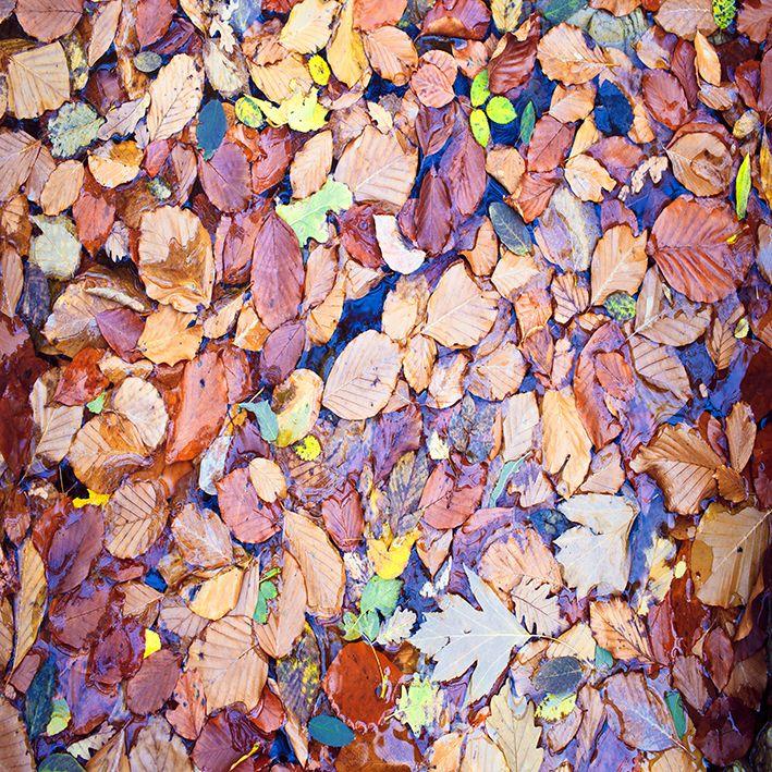 baskılı fon perde kurutulmuş yapraklar soft rengarenk desenli