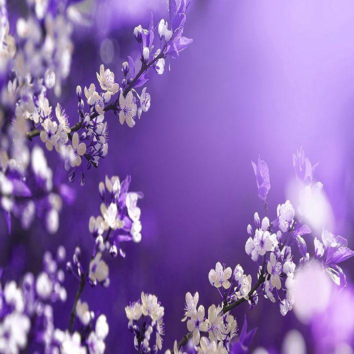 baskılı fon perde lila zemin üzerine çiçekli bahar dalları desenli