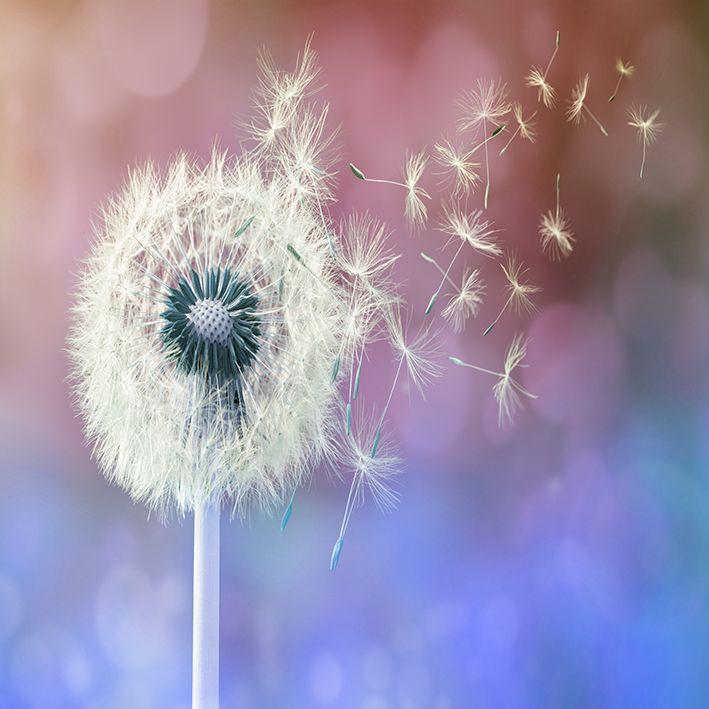 baskılı fon perde mavi pembe arka plan çiçek desenli