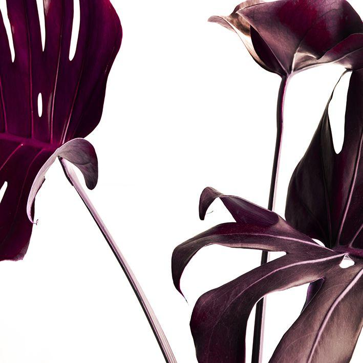baskılı fon perde mor bordo renkli tropik devetabanı yaprak desenli