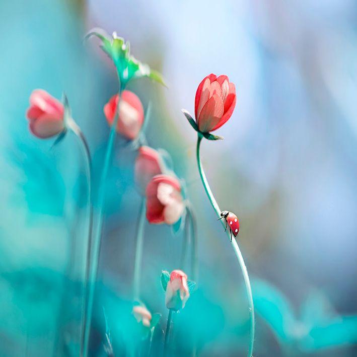 baskılı fon perde nar çiçeği renkli uğur böcekli çicek desenli