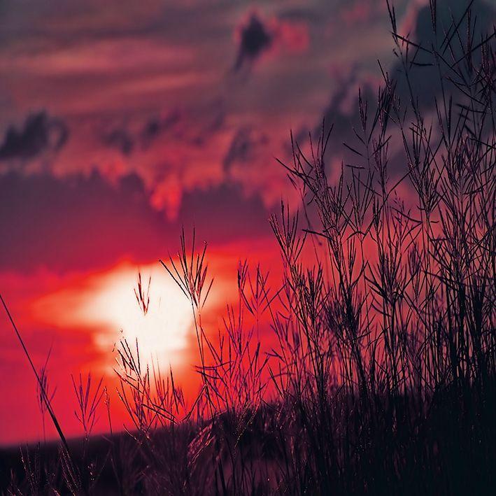 baskılı fon perde otlar arasında gün batımı etkili desenli