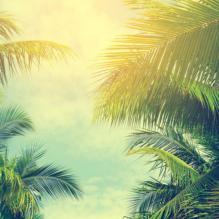baskılı fon perde palmiye ağaçları mavi gökyüzü desenli