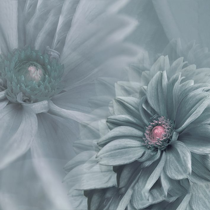 baskılı fon perde parlak gri çiçek arka plan gri doku desenli