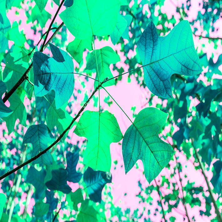 baskılı fon perde pembe zemin yeşil akça ağaç yaprak desenli