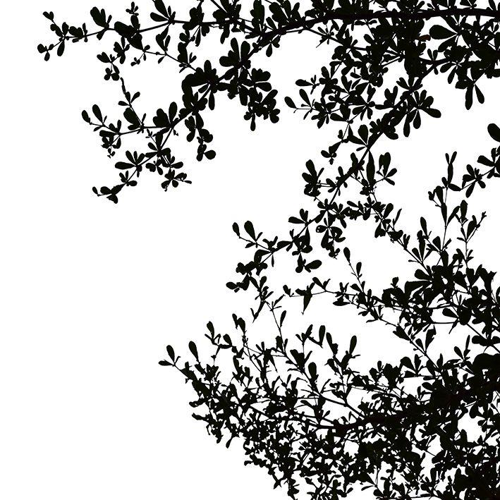 baskılı fon perde siyah arka plan ağaç yaprakları siluet desenli