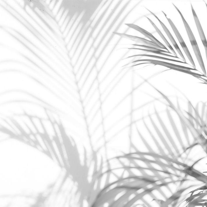 baskılı fon perde siyah beyaz hurma yaprak desenli