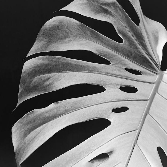 baskılı fon perde siyah beyaz tropikal yaprak desenli