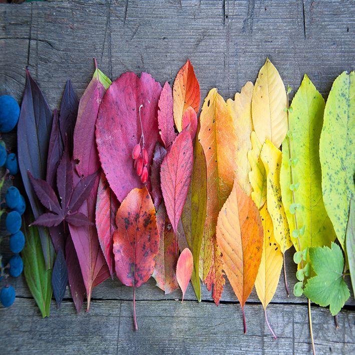 baskılı fon perde sonbahar etkili yaprak ahşap masa desenli