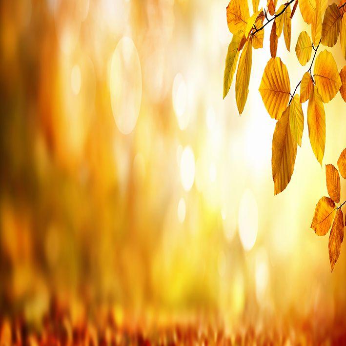 baskılı fon perde sonbahar manzaralı kayın ağaçlı desenli