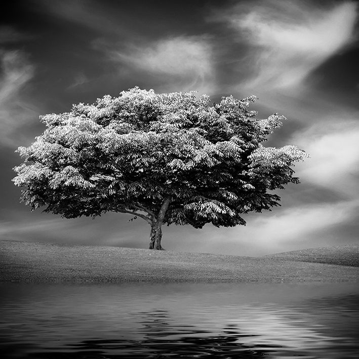 baskılı fon perde su yansımalı beyaz ve siyah ağaç