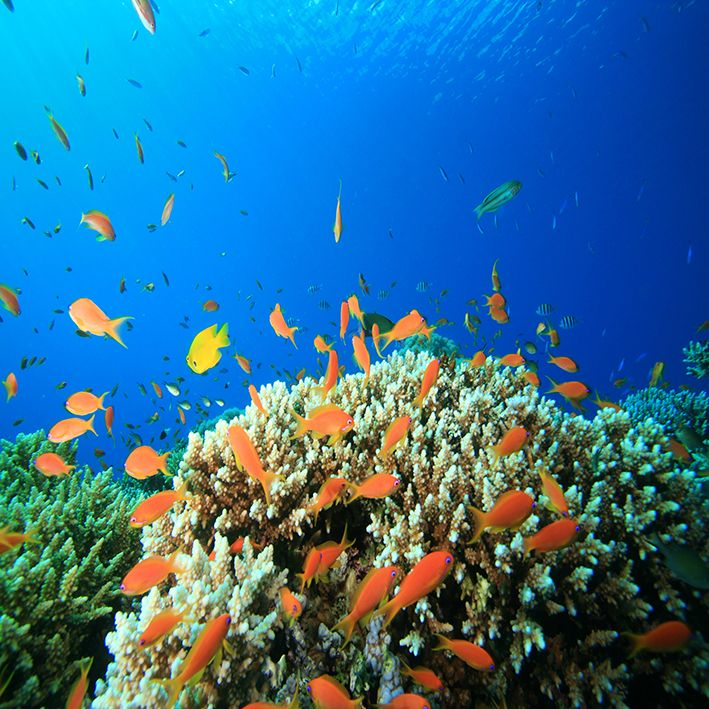baskılı fon perde sualtı akvaryum balıkları kaya desenli mavi