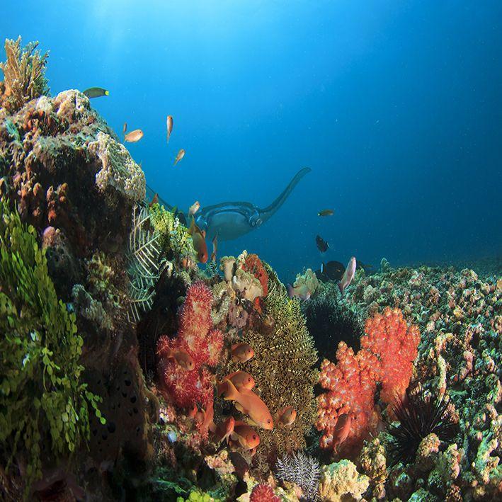 baskılı fon perde sualtı okyanus vatos balık desenli mavi