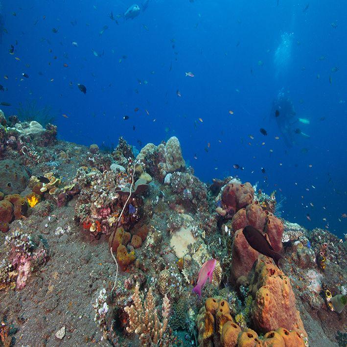 baskılı fon perde sualtı tropikal canlılar kaya taş desenli