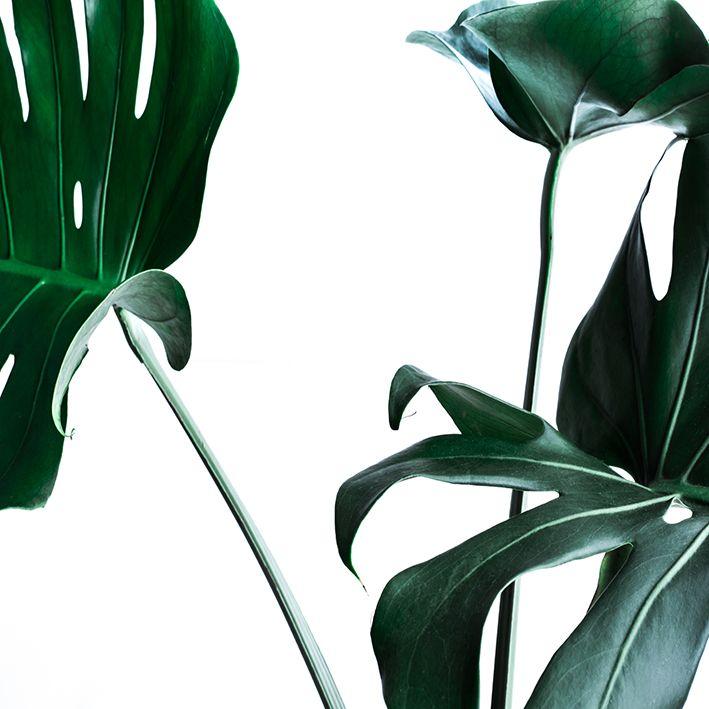 baskılı fon perde tropikal botanik doğa desenli