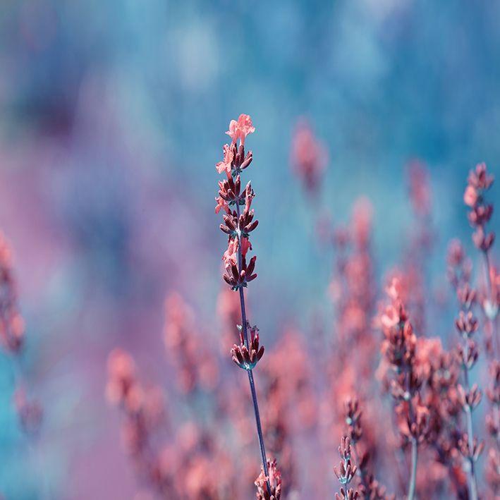 baskılı fon perde yaz bahçe etkili pembe lavanta çiçekli desenli